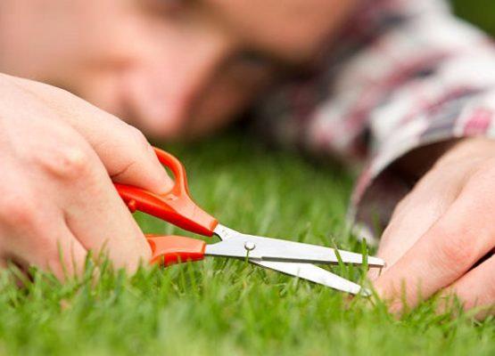 Как мы несанкционированно утилизировали траву