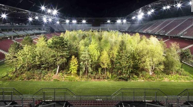 Лес на стадионе или что вы знаете о современном искусстве?